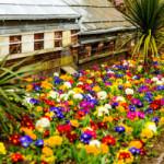 Piękny ogród – pomoc specjalisty.